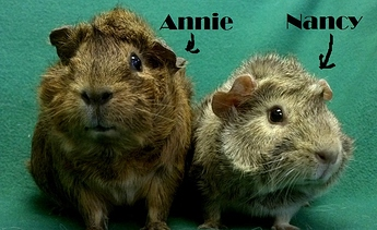 AnnieAndNancy